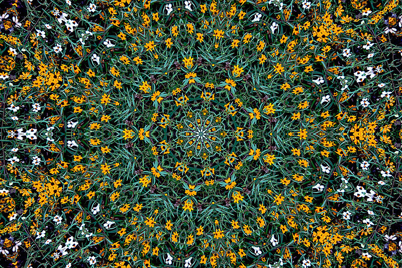 kaleidoscope image of colorful flowers