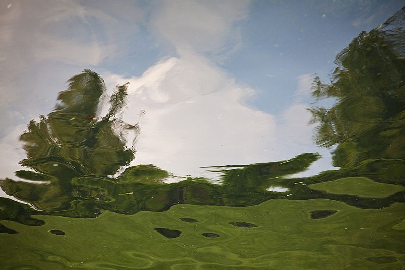 reflection of sky and trees on water
