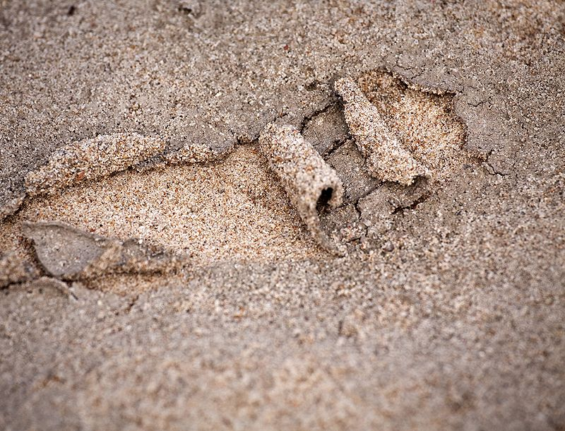 sandbar texture