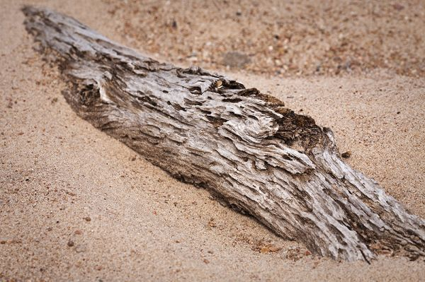 sandbar driftwood