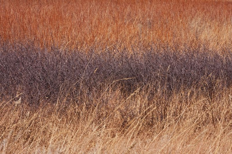 fall colors in prairie grasses
