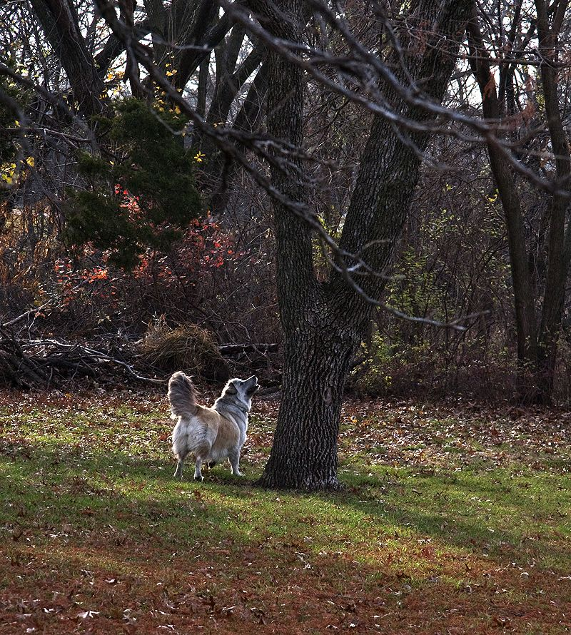 dog with treed squirrel
