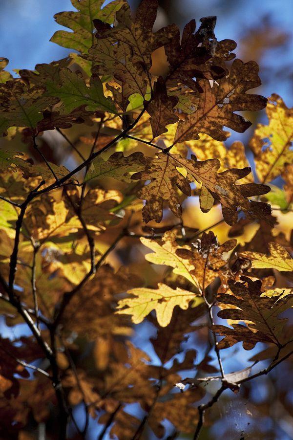 autumn leaves near buffalo river arkansas