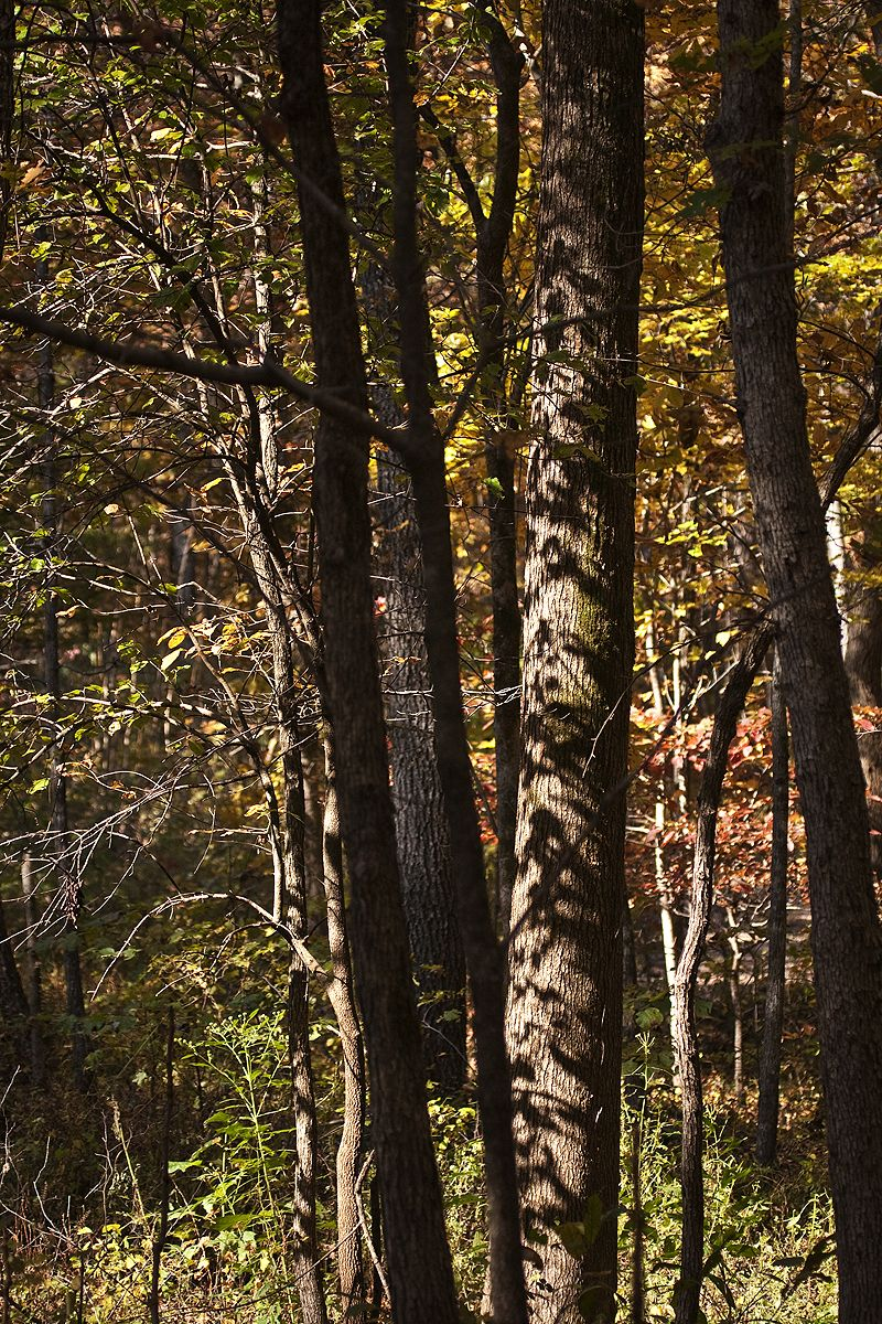 trees and shadows in autumn on buffalo river