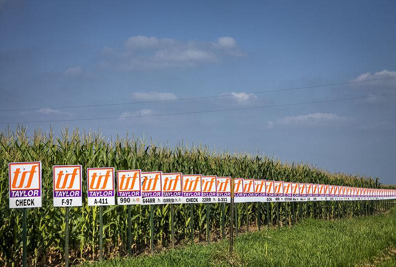 seed corn identified