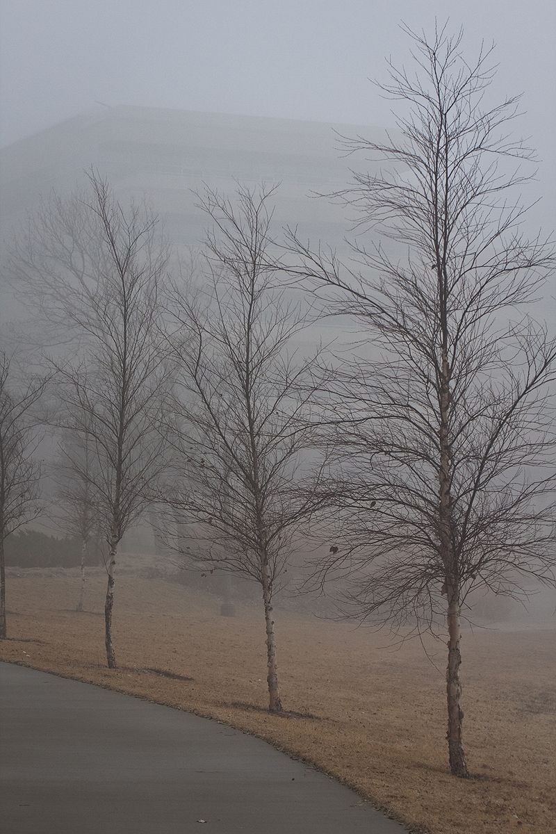 three trees standing in the fog