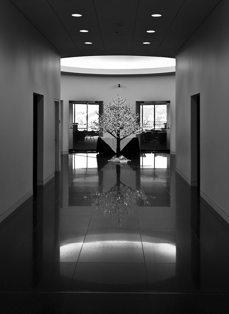 tree reflected in hall at art museum