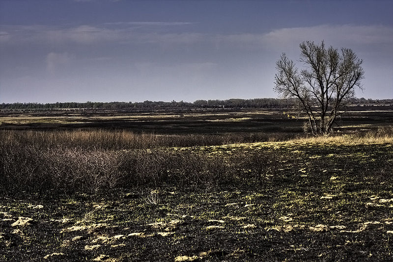 a few days after the prairie was burned
