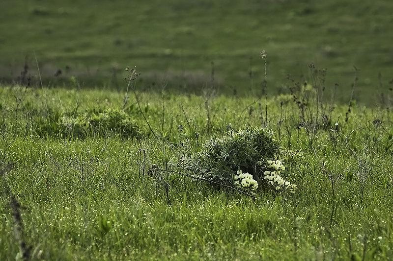 wildflower in morning dew