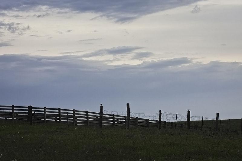 birds on fence at dawn