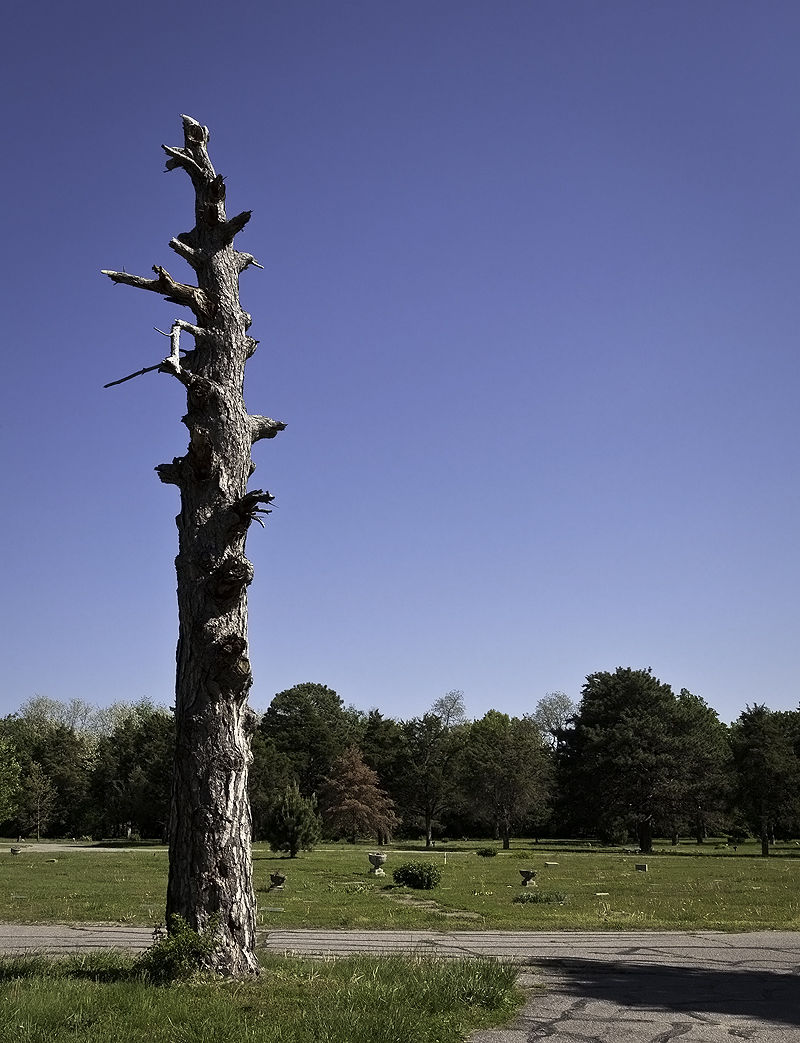 snag in center of cemetery