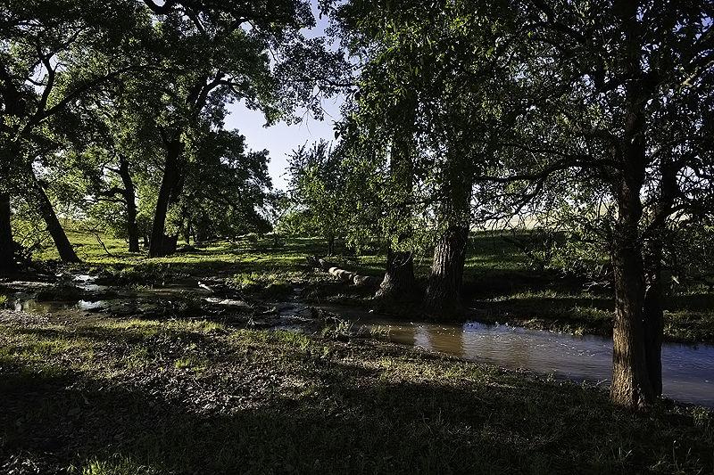 trees by the creek on the tallgrass prairie
