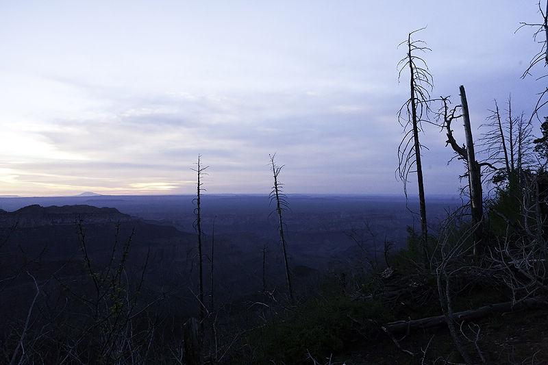 skelton trees at canyon edge