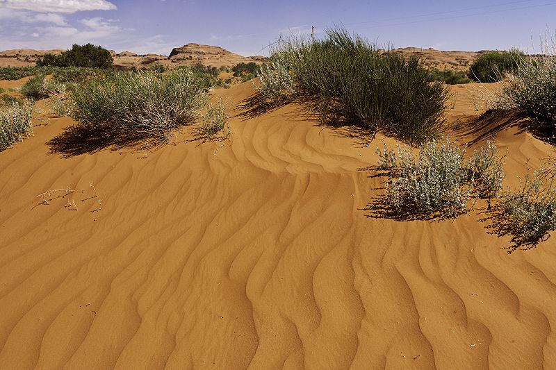 sand and plants in the utah desert