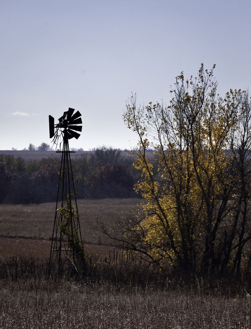 windmill and fall trees