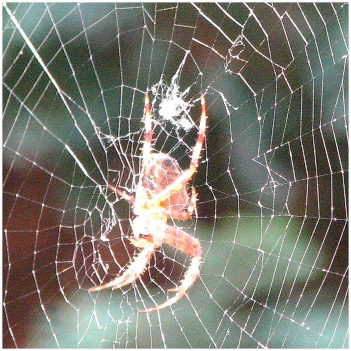 Spin in het web