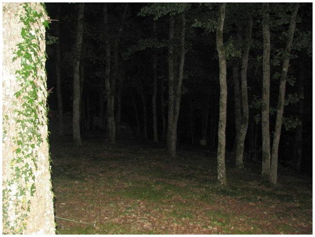 Nachtbomen