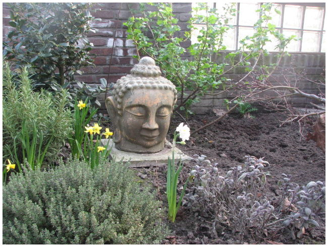 Voorjaar in de tuin