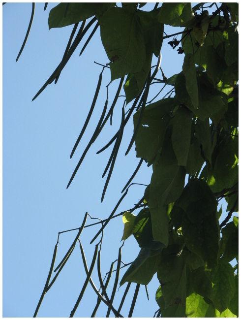 Beantree