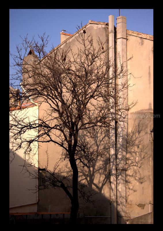 Comme un arbre dans la ville ...