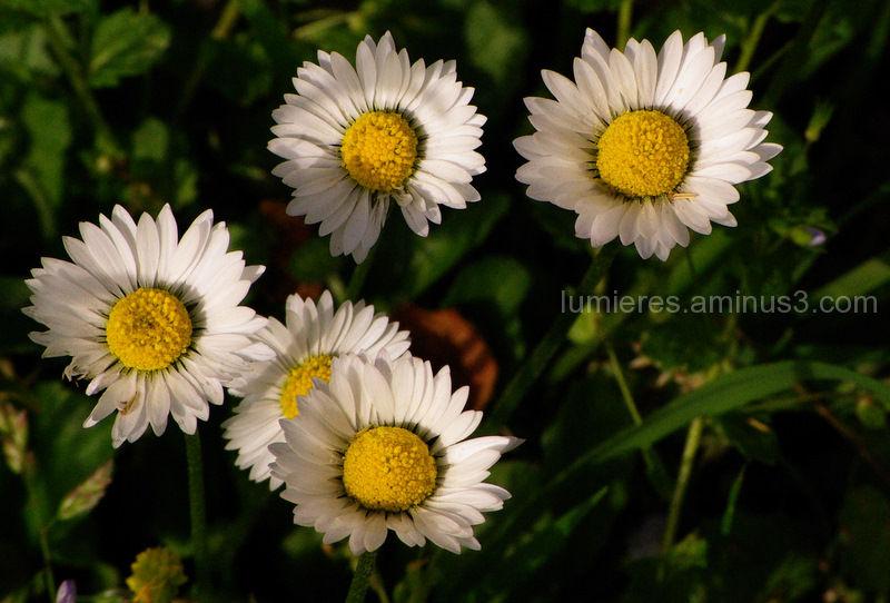 Fleur proxy