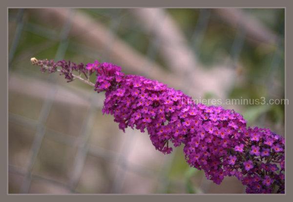 In my garden 3 : l'arbre à papillons