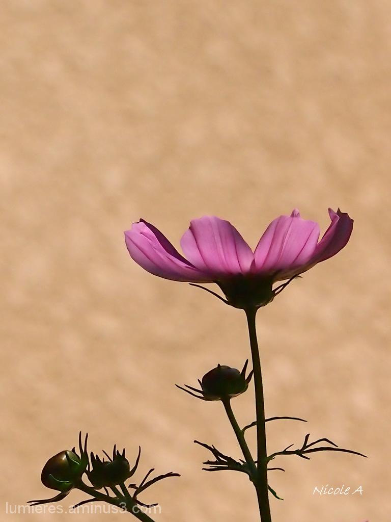Flower in the mornong light