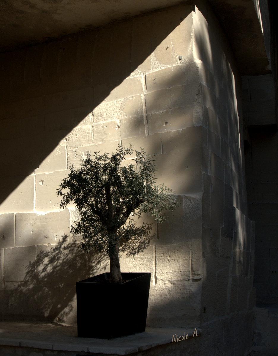 Carrières de Lumière les Baux de Provence
