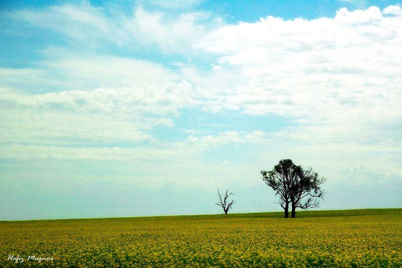 a tree in a flower field