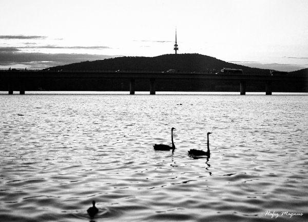 lake burley griffin at sunset