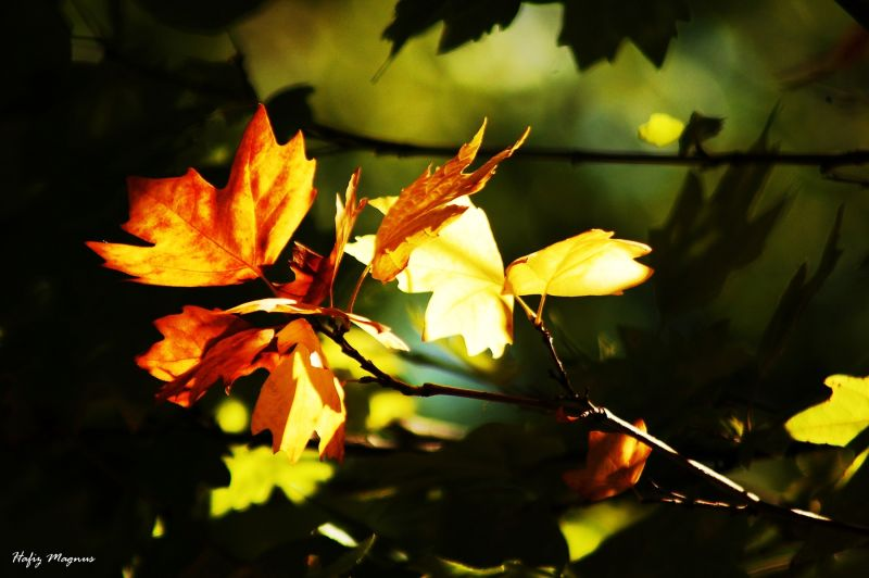 the first leaves of fall