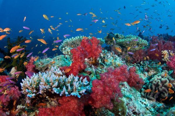 underwater photography Fiji worldclass soft coral