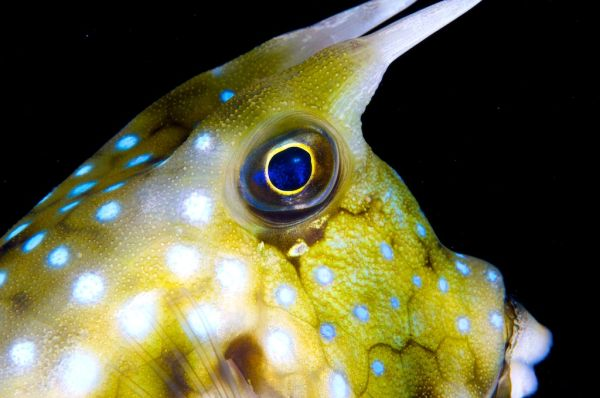 lembeh strait diving, sulawesi, UW photography