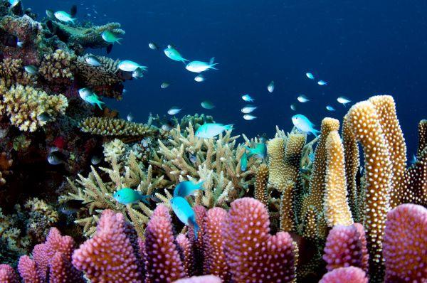 fidji, pacific, taveuni, soft coral