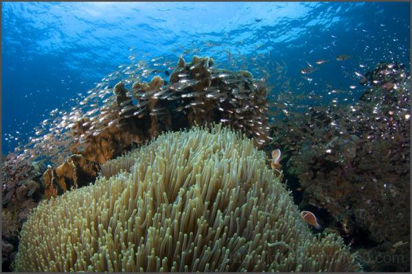 tulamben, underwater photography, nudi art