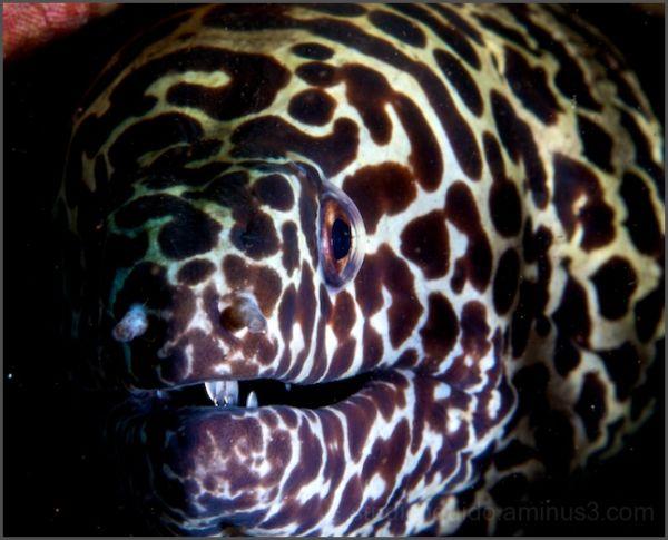 tulamben, macro photography, bali,indonesia