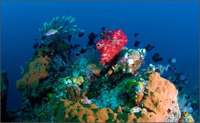 tulamben, underwater photography, bali,indonesia