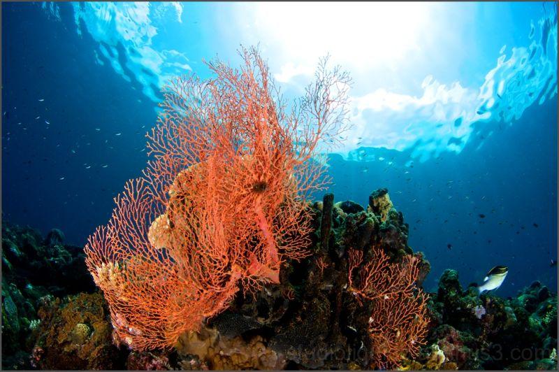tulamben, Coral Garden , indonesia