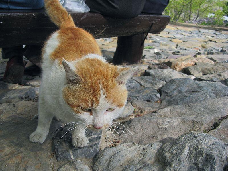 rover cat animal pet