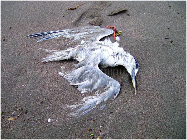 روزی این زمین این ساحل زیر بالهای من بود