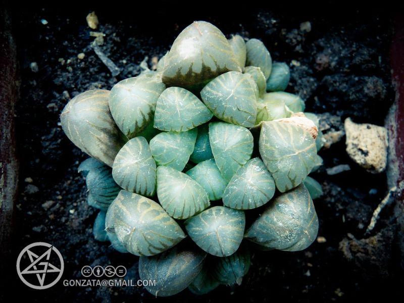 Cactus Extraterrestre