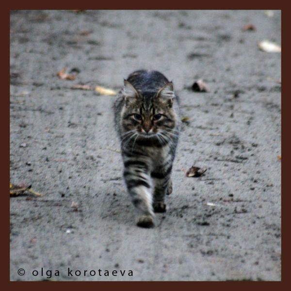 Trotter cat))
