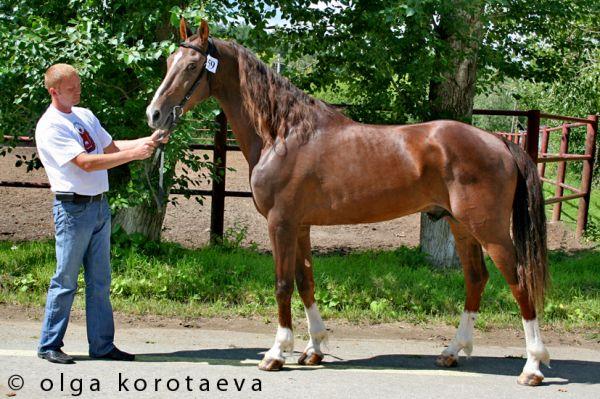 Sverstnik (ring show)