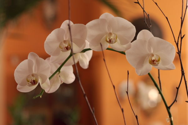 Orange and Orchid