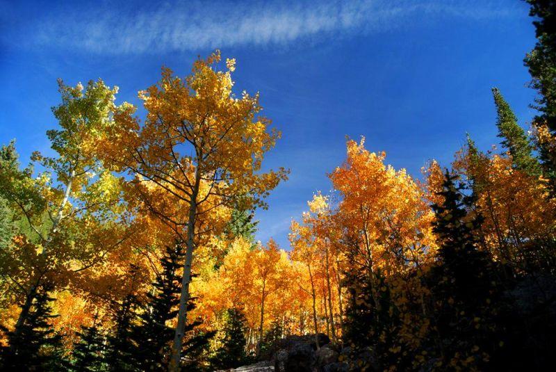 autumn leaves in estes park, colorado