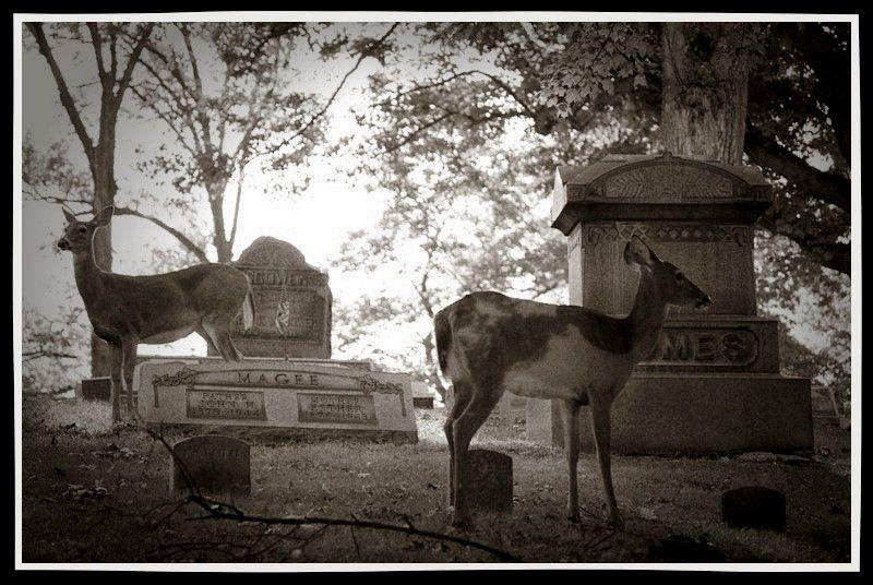 Deer Deceased ~