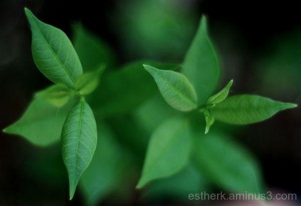 Green......