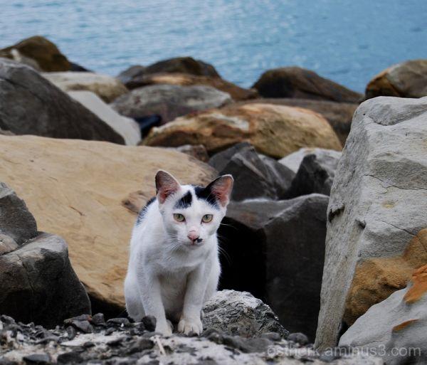 Sea Feline.