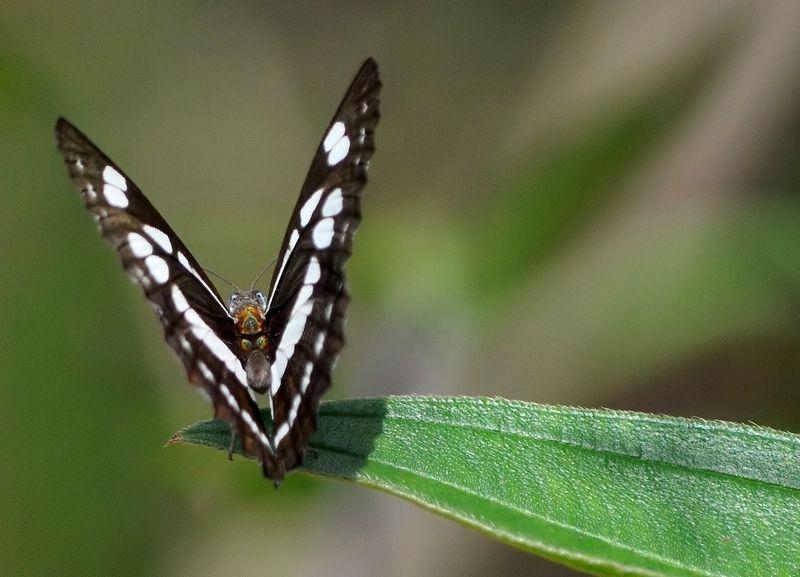 Kipandi Butterfly Park - a series