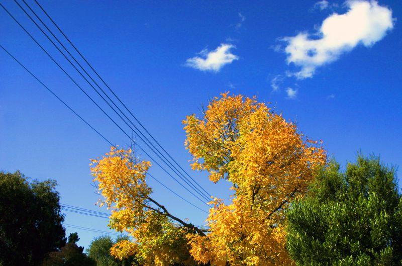 tree powerline